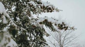 Het bos van de de hemelwolk van de sneeuwwinter stock footage