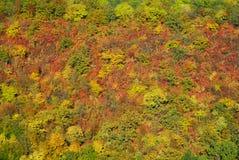 Het bos van de de herfstberg Royalty-vrije Stock Afbeeldingen