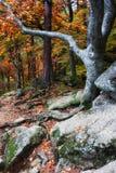 Het bos van de de herfstberg Stock Foto