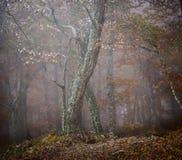 Het bos van de de herfstmist Royalty-vrije Stock Afbeeldingen