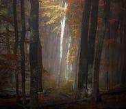 Het bos van de de herfstmist stock fotografie