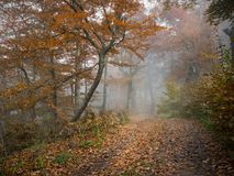 Het bos van de de herfstmist Stock Afbeelding