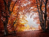 Het bos van de de herfstmist Royalty-vrije Stock Foto's