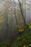 Het bos van de de herfstmist stock afbeeldingen