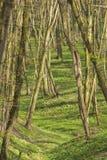 Het bos van de de lentetijd Royalty-vrije Stock Fotografie