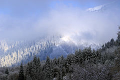 Het bos van de de winterberg met wolken Royalty-vrije Stock Foto