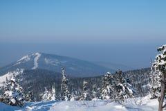 Het bos van de de winterberg in sneeuw Royalty-vrije Stock Afbeelding