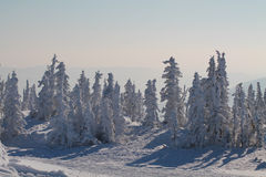Het bos van de de winterberg in sneeuw Stock Fotografie