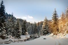 Het bos van de de winterspar Stock Foto