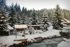Het bos van de de winterspar Stock Foto's