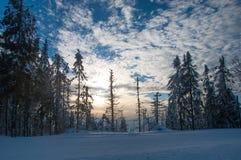 Het bos van de de winterspar Stock Afbeeldingen