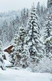 Het bos van de de winterspar in Oekraïense Karpatische Bergen Royalty-vrije Stock Afbeeldingen