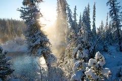 Het bos van de de winterspar in sneeuw Stock Afbeelding