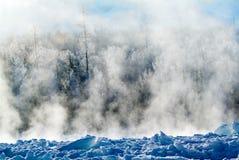 Het bos van de de winterspar in sneeuw Stock Foto's