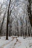 Het bos van de de wintervorst royalty-vrije stock afbeeldingen