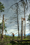 Het Bos van de dood Stock Afbeeldingen