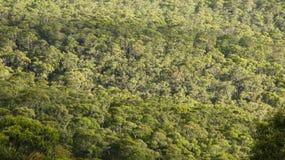 Het bos van de eucalyptus hierboven wordt gezien dat van Stock Fotografie