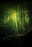 Het bos van de fantasie Stock Afbeeldingen