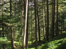 Het Bos van de fee Royalty-vrije Stock Afbeelding