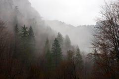 Het bos van de geheimzinnigheid Stock Afbeelding