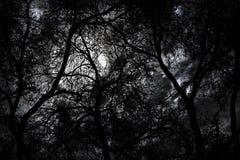 Het bos van de geheimzinnigheid bij nacht Stock Fotografie