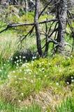 Het bos van de Harzberg Stock Foto