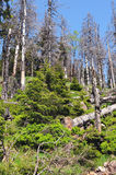 Het bos van de Harzberg Royalty-vrije Stock Afbeeldingen