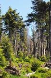 Het bos van de Harzberg Royalty-vrije Stock Afbeelding