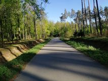 Het bos van de de hemelstraat van het aardhout stock foto's