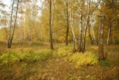 Het bos van de herfst. stock afbeelding