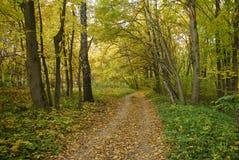 Het bos van de herfst. stock foto's