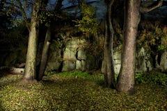 Het bos van de herfst Vector Illustratie
