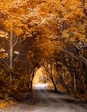 Het bos van de herfst. Royalty-vrije Stock Foto's