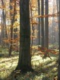 Het bos van de herfst Stock Foto
