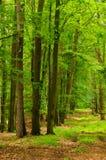 Het bos van de herfst Royalty-vrije Stock Foto's
