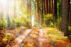 Het Bos van de herfst. Daling stock foto's
