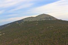 Het bos van de herfst in de afstand Stock Foto