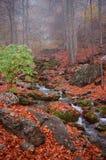 Het bos van de herfst in de berg van de Krim Stock Afbeelding