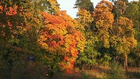 Het bos van de herfst de herfst landschap 4K stock video