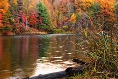 Het Bos van de herfst door het Meer stock foto's