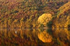 Het bos van de herfst en meerlandschap Royalty-vrije Stock Fotografie