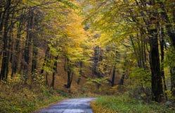 Het bos van de herfst in geel Stock Foto