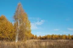Het bos van de herfst Landschap stock foto's