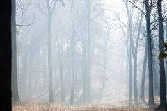 Het bos van de herfst met mist Irpin ukraine royalty-vrije stock fotografie