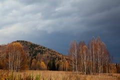 Het bos van de herfst na regen royalty-vrije stock afbeeldingen