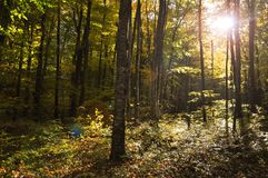 Het bos van de de herfstdaling stock foto