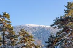 Het bos van de landschapsmening bij het Nationale Park van Golcuk royalty-vrije stock foto's