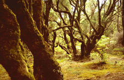 Het bos van de laurier Stock Afbeeldingen