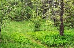 Het bos van de lente Stock Fotografie