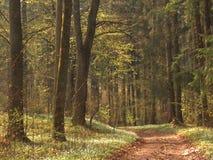 Het bos van de lente royalty-vrije stock fotografie